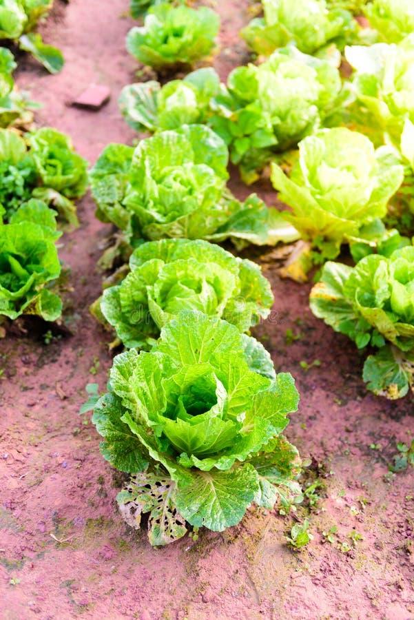 Китайский салат на tubberk Phu стоковое фото