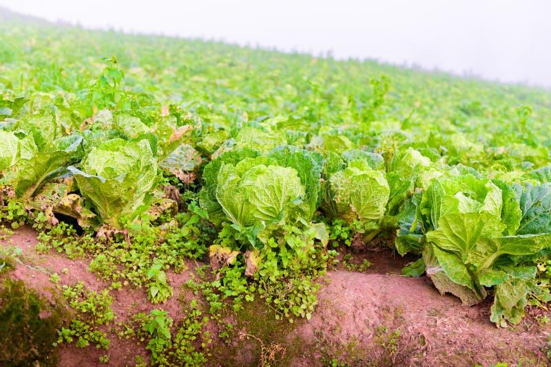 Китайский салат на tubberk Phu стоковое изображение rf