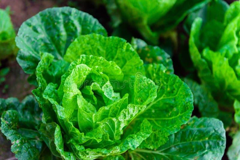 Китайский салат на tubberk Phu стоковые изображения rf