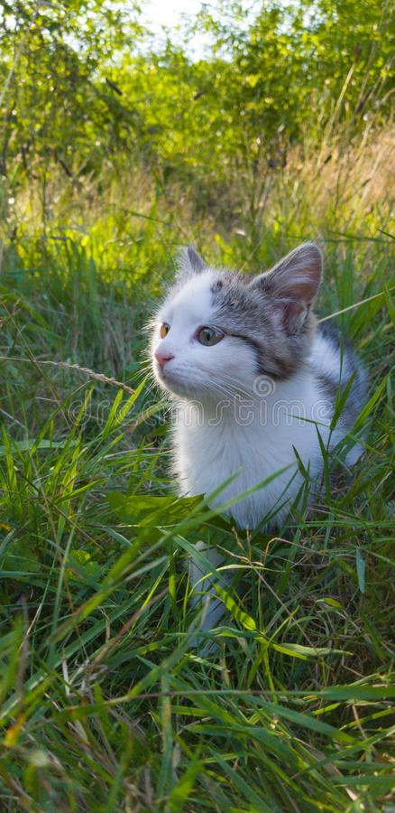 Киттен играет в саду стоковая фотография