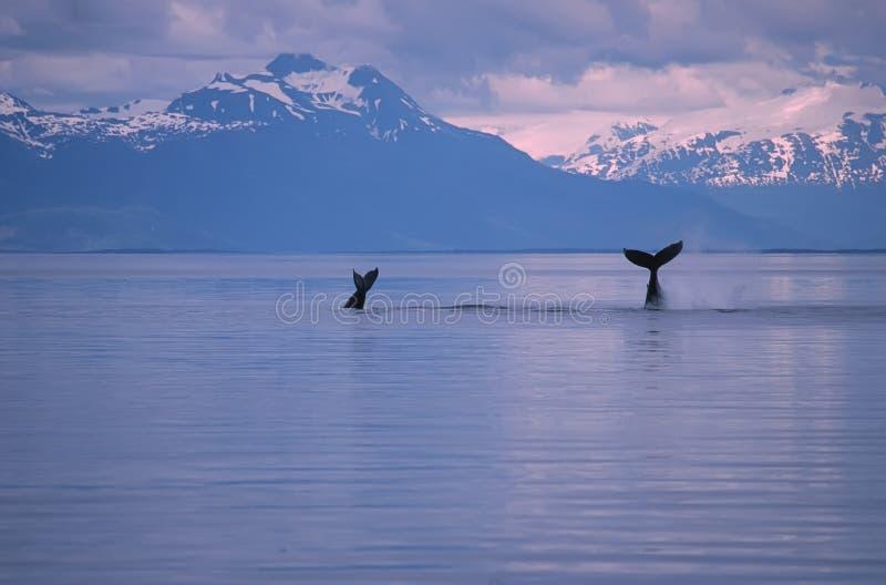 киты стоковая фотография