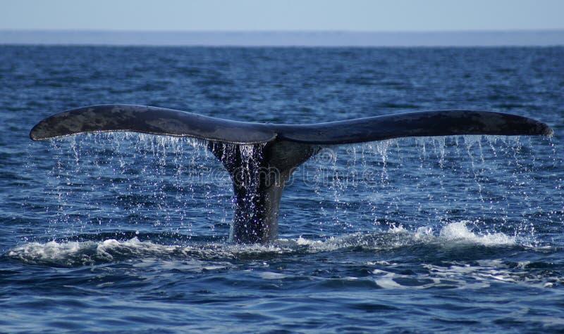 кит кабеля стоковое фото