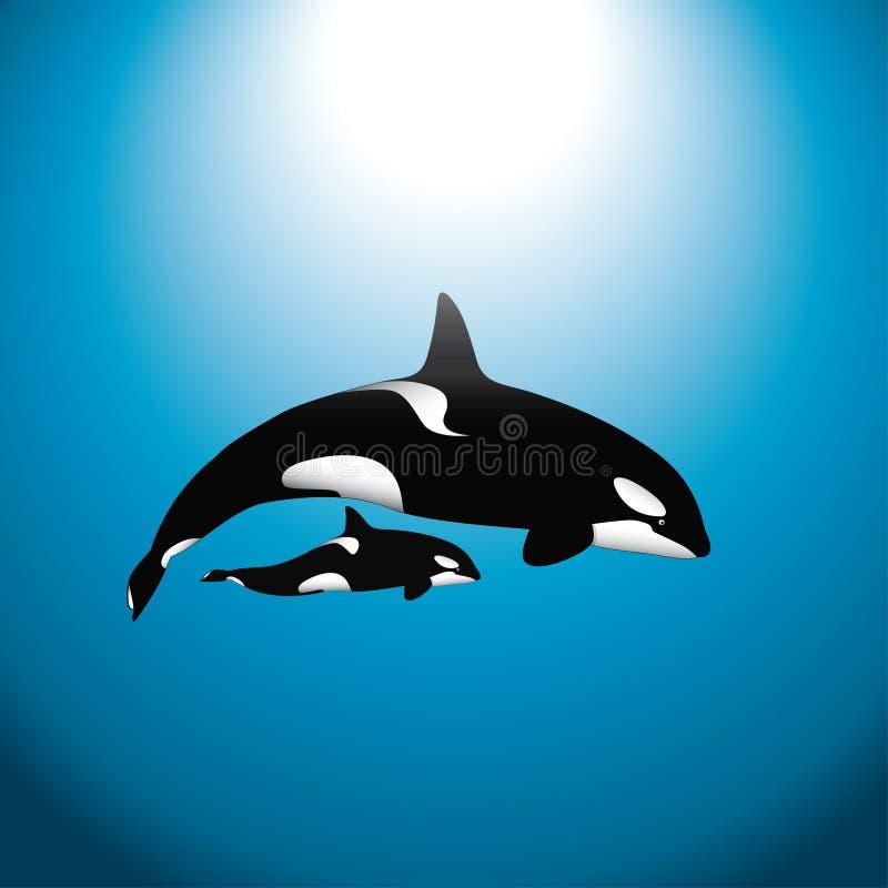 Download кит косатки младенца иллюстрация вектора. иллюстрации насчитывающей иллюстрация - 18387504