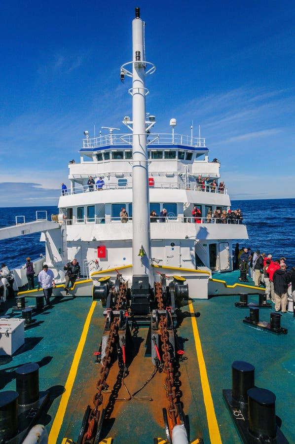 Кит наблюдая в Антарктике стоковые изображения rf