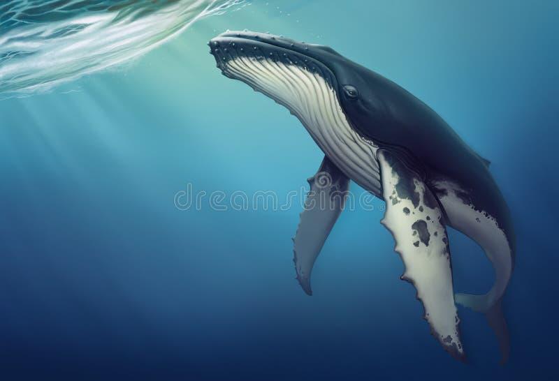 Кит под иллюстрацией воды реалистической copis бесплатная иллюстрация