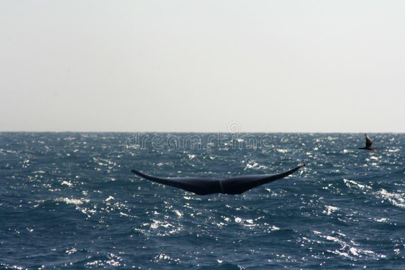 кит птицы стоковые изображения rf