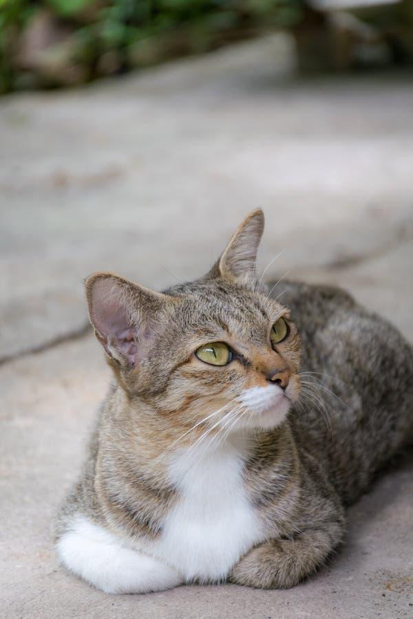 Кладут прелестный кот вниз на землю стоковое изображение
