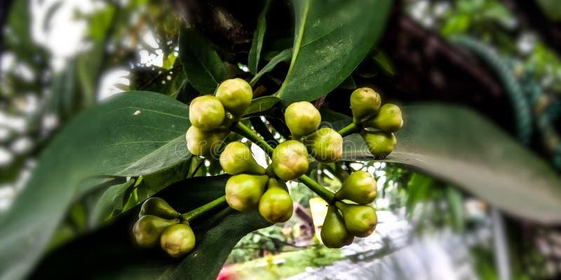 Клапан плода guava воды стоковые изображения rf