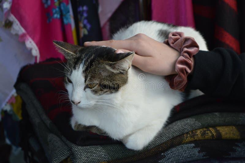 Класть кота и кто-нибудь прижимаясь она стоковое фото rf