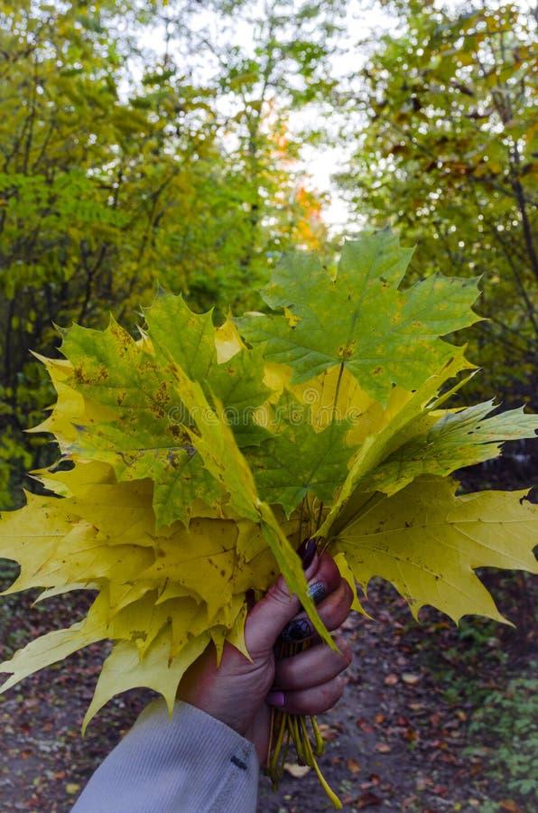 Кленовые листы осени стоковое изображение