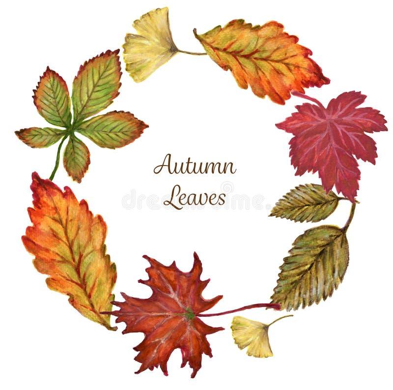 Кленовые листы с красочными элементами венка акварели листьев  иллюстрация вектора