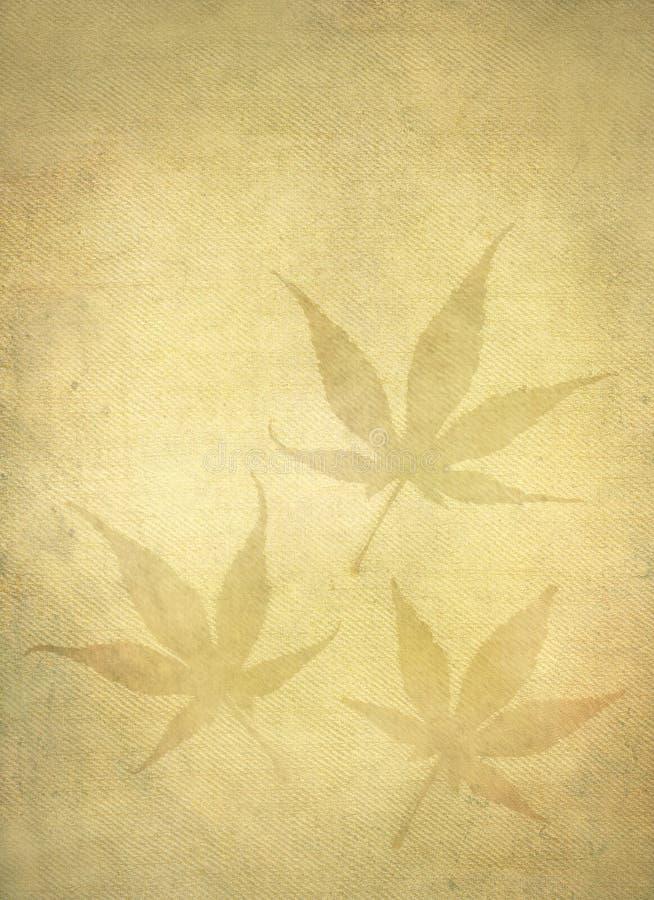 клен листьев японца предпосылки стоковые изображения rf