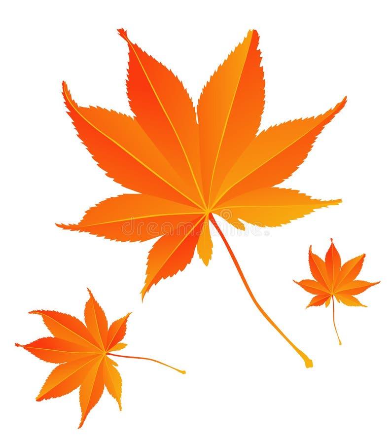 клен листьев иллюстрация штока