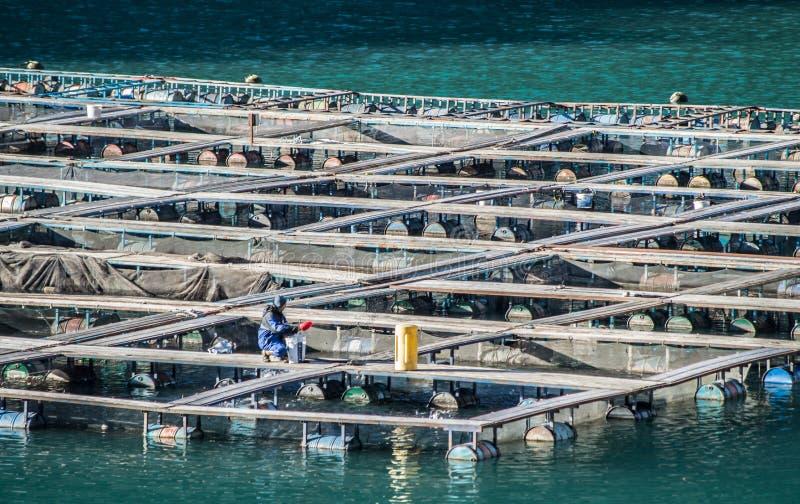 Клетки для сельского хозяйства рыб стоковые изображения rf