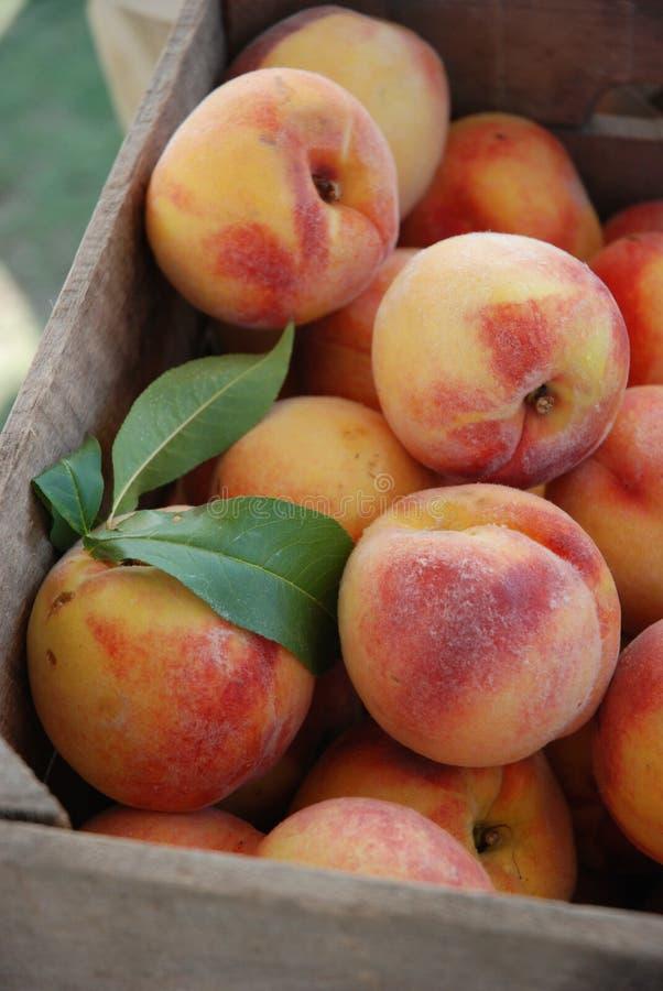 Клеть персиков стоковая фотография rf