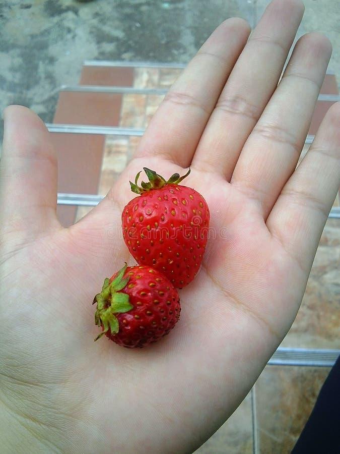Клубника, необыкновенный плодоовощ стоковое фото