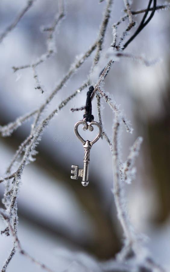 Ключ на ветви зимы стоковые фотографии rf