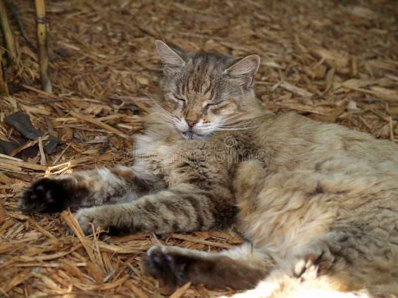 ключ s кота hemingway западный стоковые изображения