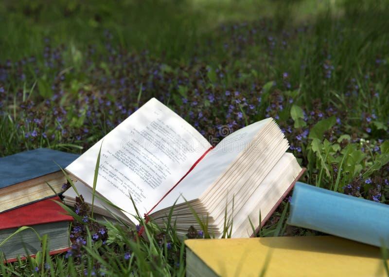 Книга стихотворения лежа на поле с полевыми цветками стоковая фотография