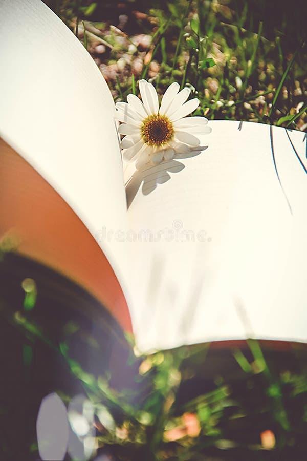 Книга цветков стоковая фотография rf