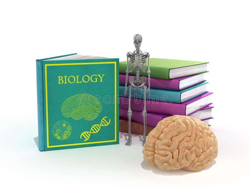 Книги на биологии лежат в куче рядом с ними и скелетом и иллюстрация вектора