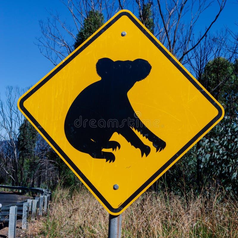 Коалы наблюдают вне для их - австралийские знаки найденные вдоль дороги стоковые изображения