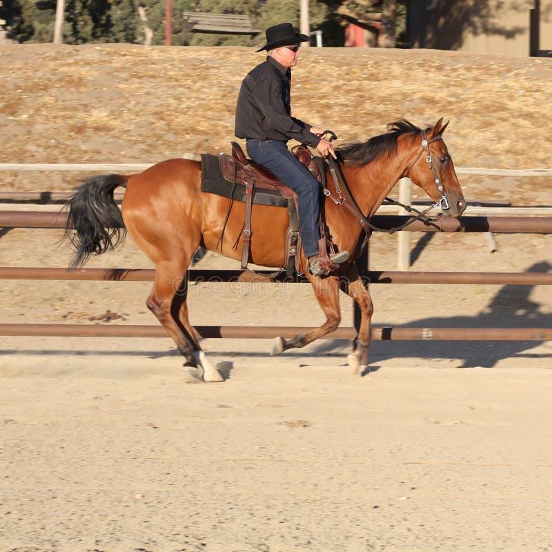 Ковбой на лошади i стоковое изображение rf