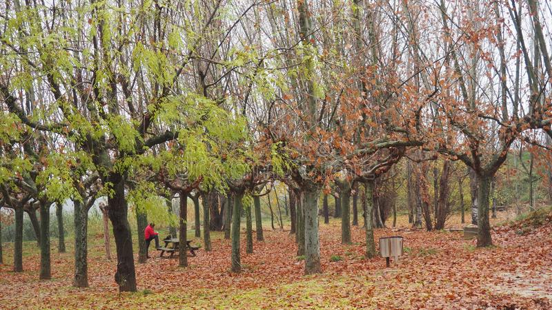 ковер листьев, лерида, каталония, спаин, европа стоковое изображение