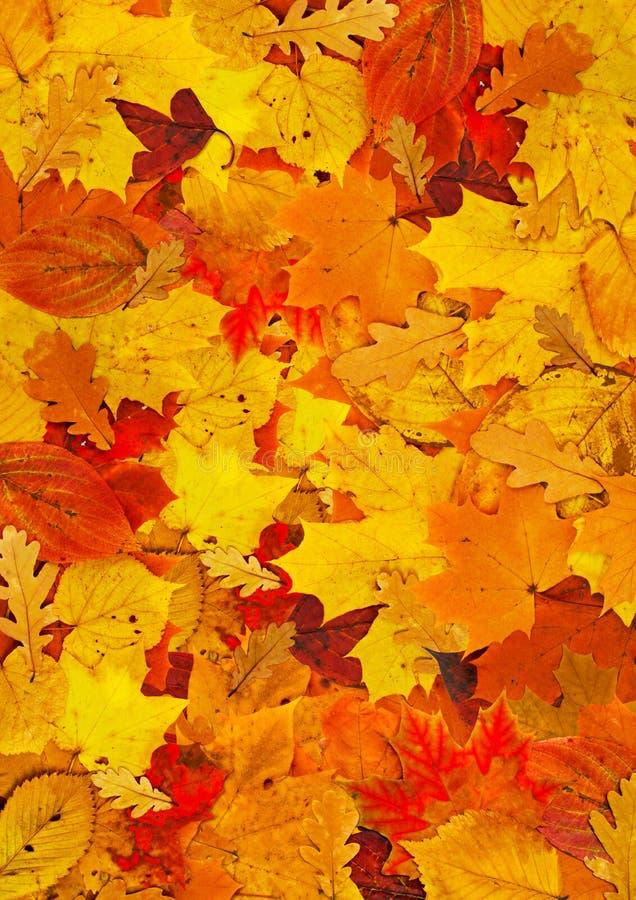 Ковер листьев стоковая фотография