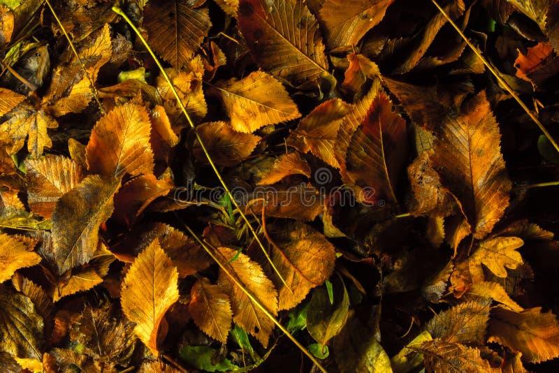 Ковер осени стоковое изображение rf