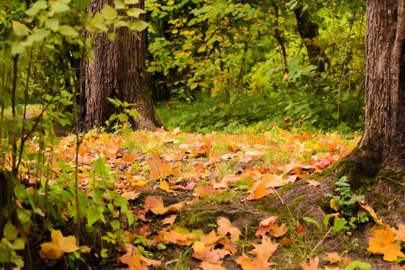 Ковер от листьев осени стоковое фото