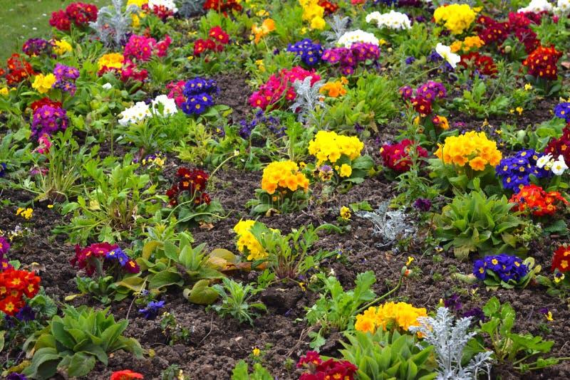 Ковер ярких цветков в городе стоковые фотографии rf