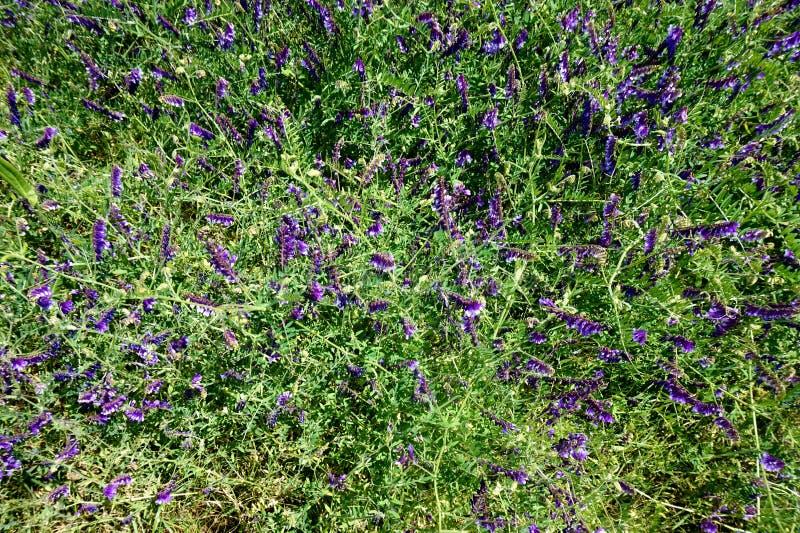 Ковер wildflowers, motley ` s плотника стоковое фото