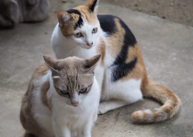 Когда 2 любят кота совместно стоковые изображения rf