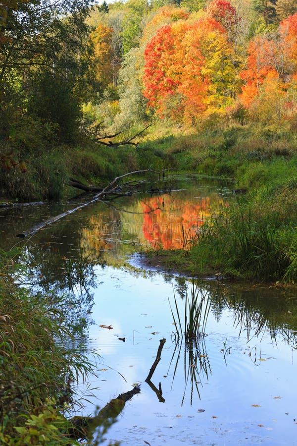 Когда осень принимает сверх лето около реки Gauja стоковое изображение