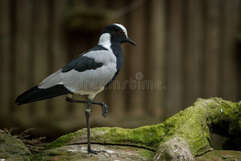 Когда птицы отдыхают ona одиночная нога стоковое изображение