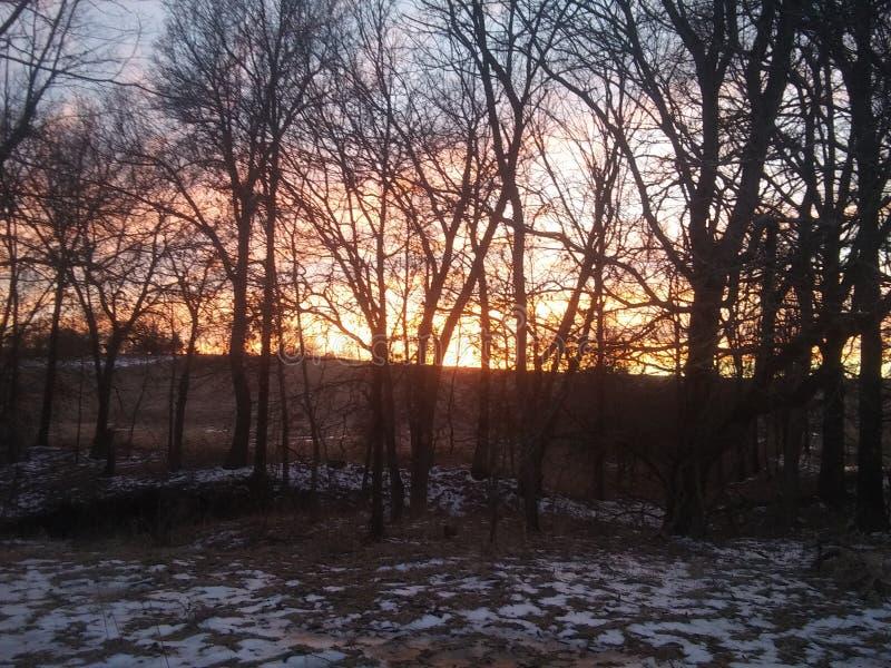 Когда солнце падает через деревья стоковое изображение rf