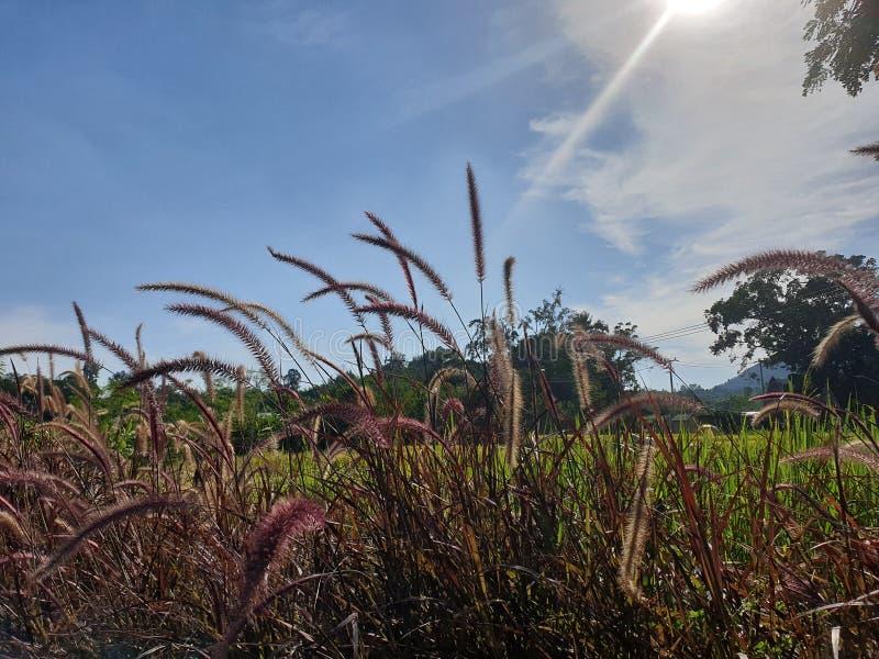 Когда fom неба в полдень светлое солнце и красивые облака В зеленом луге стоковые изображения