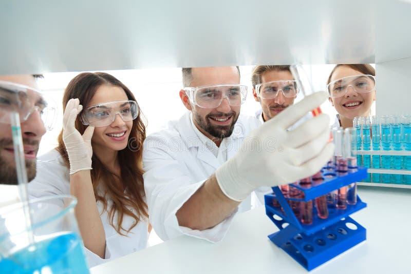 Когорта ученых и аптекари работая в лаборатории стоковые фото