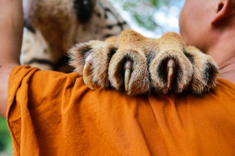 Коготь тигра стоковое изображение
