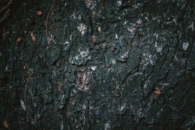 Кожа дерева стоковое фото rf