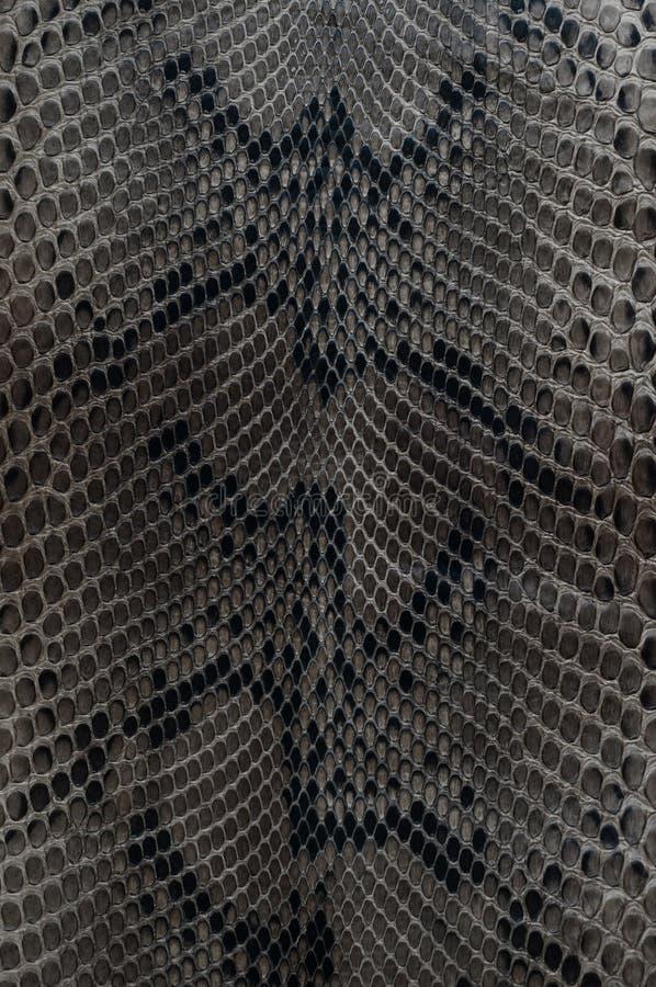 Кожа змейки стоковые изображения rf