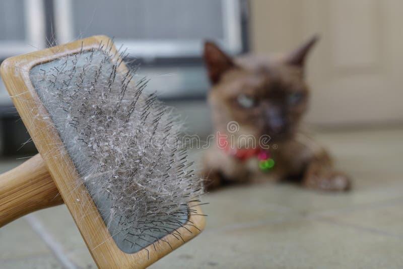 Кожа и волосы кота на щетке после холить стоковая фотография rf