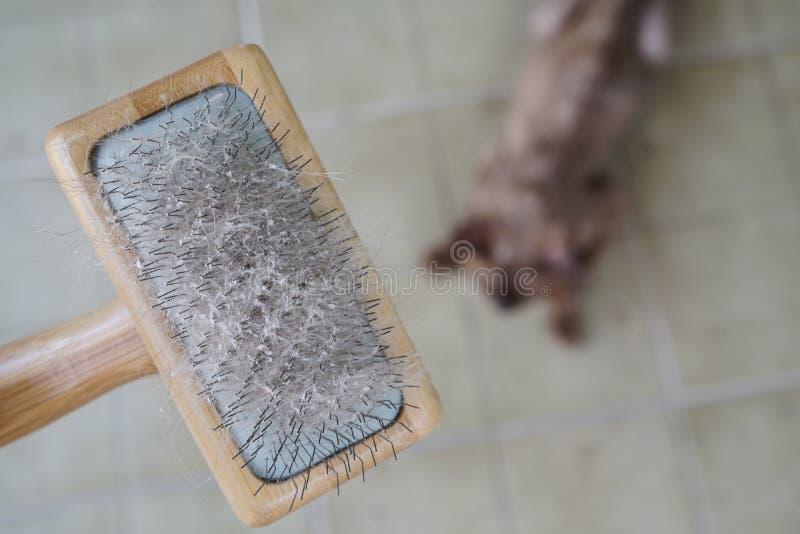Кожа и волосы кота на щетке после холить стоковое фото rf