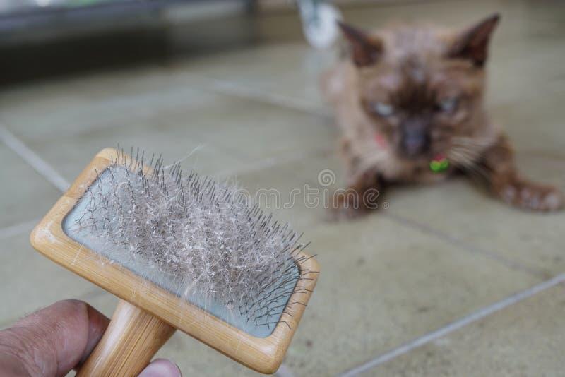 Кожа и волосы кота на щетке после холить стоковое фото