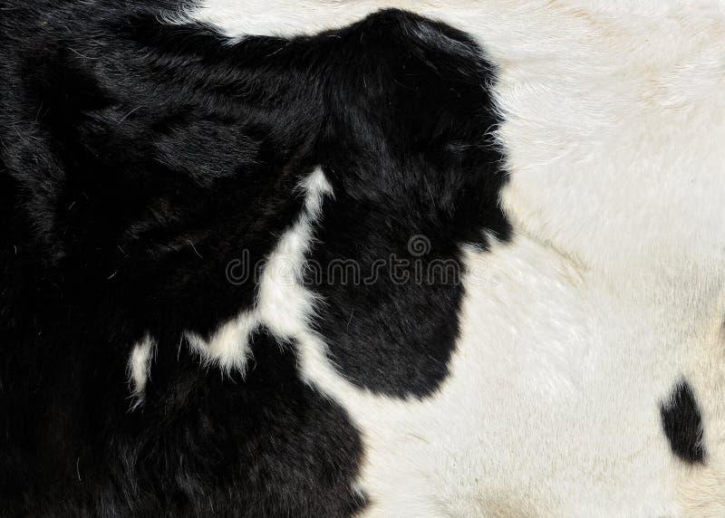 Download кожа молокозавода коровы стоковое изображение. изображение насчитывающей макрос - 18380641