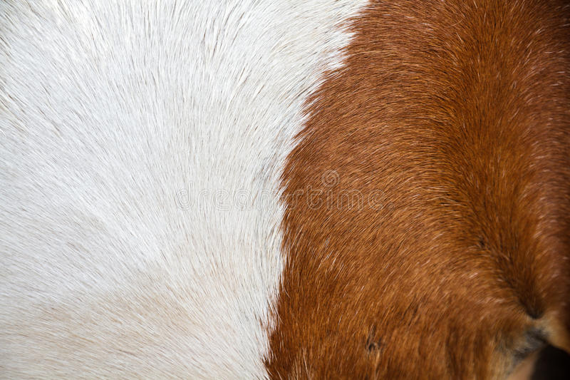 Кожа лошади стоковое изображение