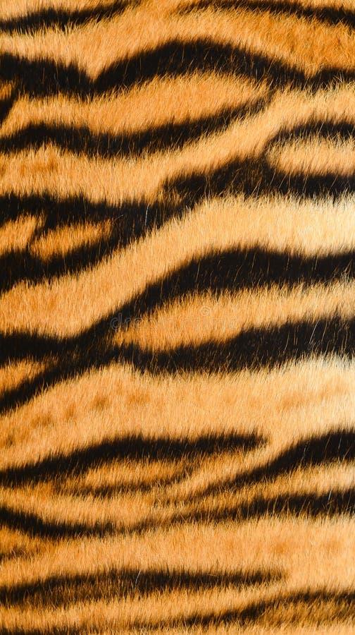 Кожа тигра стоковая фотография rf