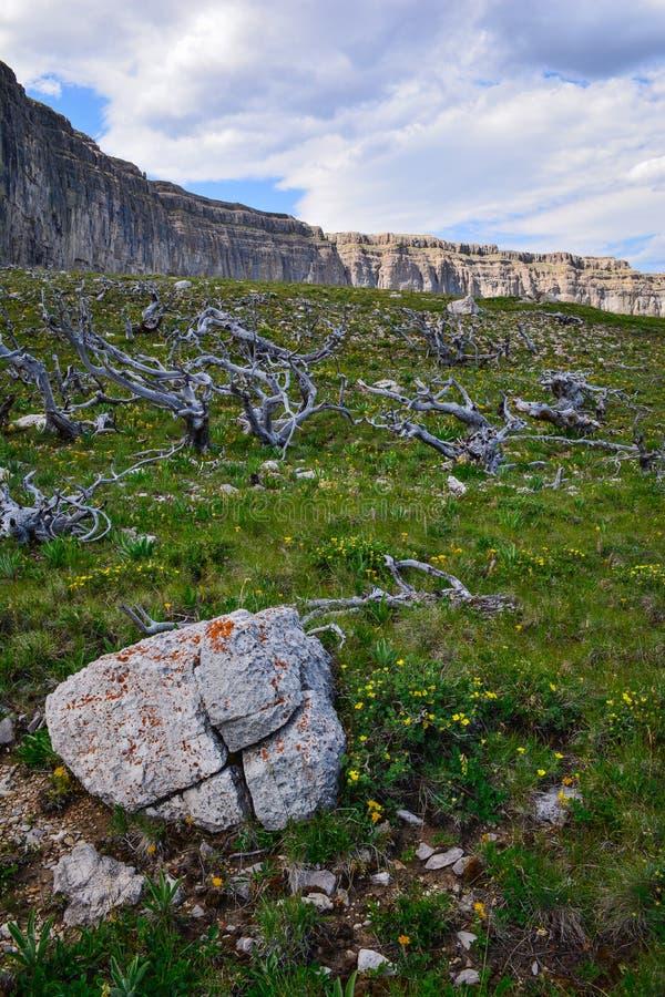 Козёл отпущения Wildrness стоковая фотография
