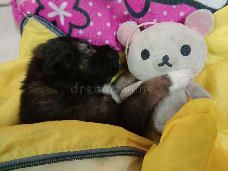 Кококо Беби Дог - это мило спать стоковое изображение rf
